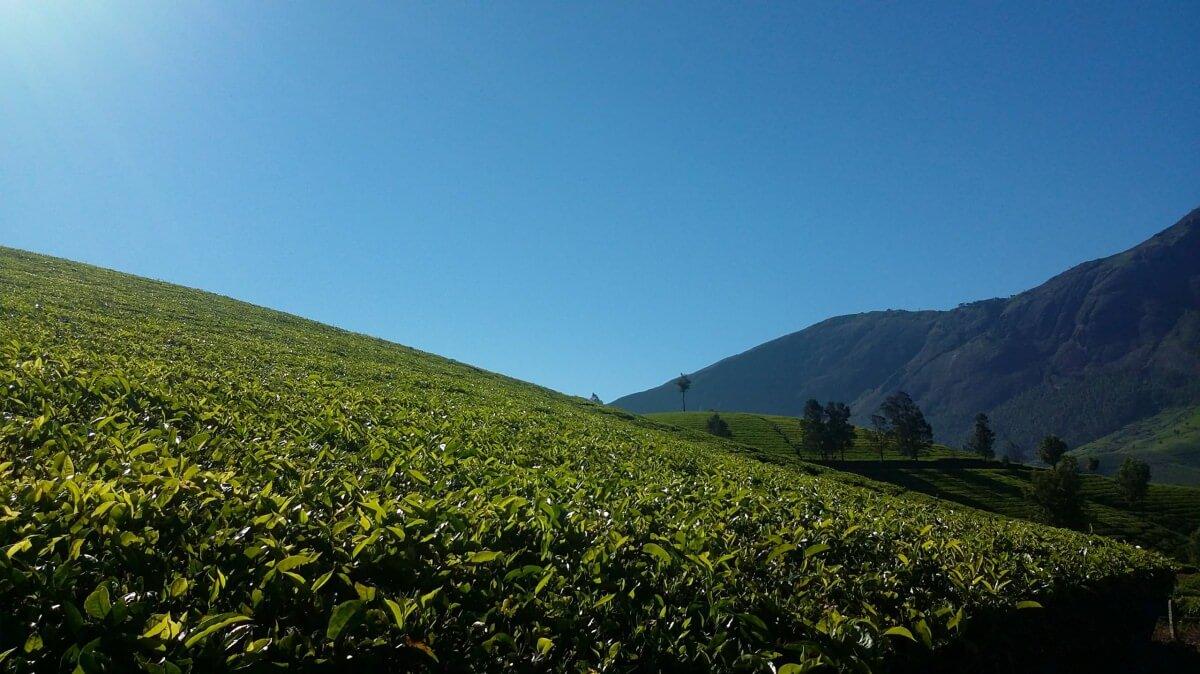 Travel Vellam - Devanagari - Centro Yoga Aosta